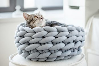How to Make a Cat Bed With Ohhio Braid